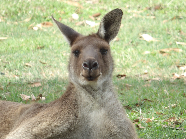 the dr evil of Roos?