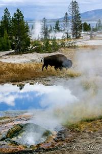 """Splendors of Yellowstone"""