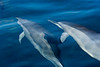 Spinner Dolphins