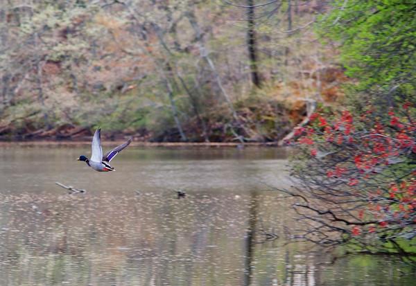 Fall Flight
