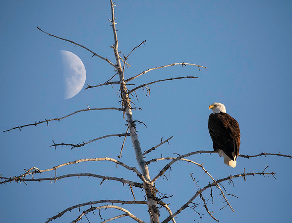 Grand Teton NP | Wyoming