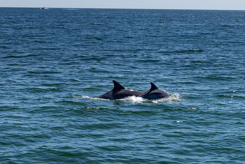 Dolphins-004