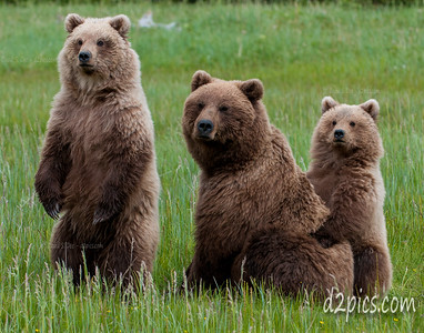 3 Bears Watching