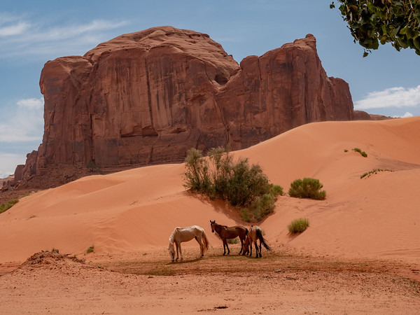 Horses at Sands Spring