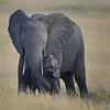 Baby Elephant and Mother, Amboseli National Park, Kenya, East Africa