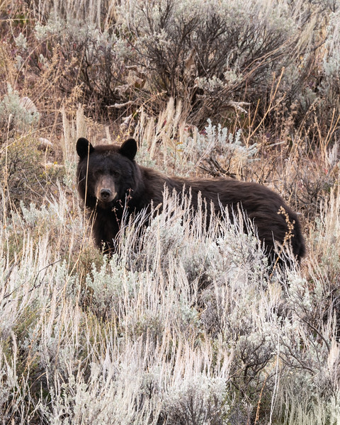 Brown bear on hillside