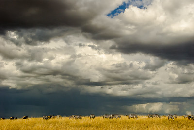 The Mara with zebras and wildebeest.