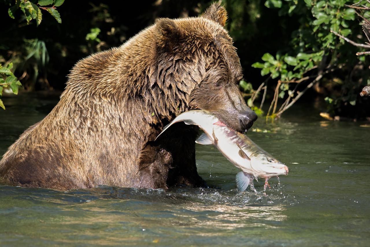 BearFish%20%281%20of%202%29-X2.jpg