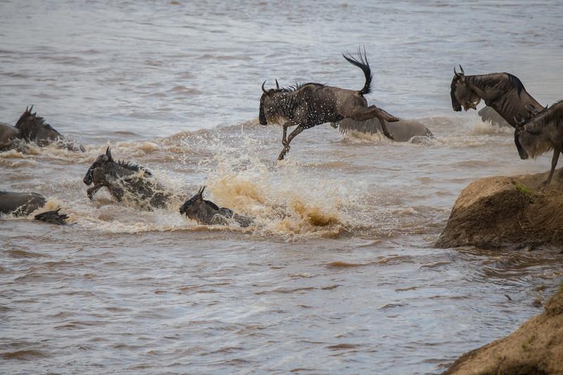 Great Migration of Wildebeests, Mara River, Tanzania