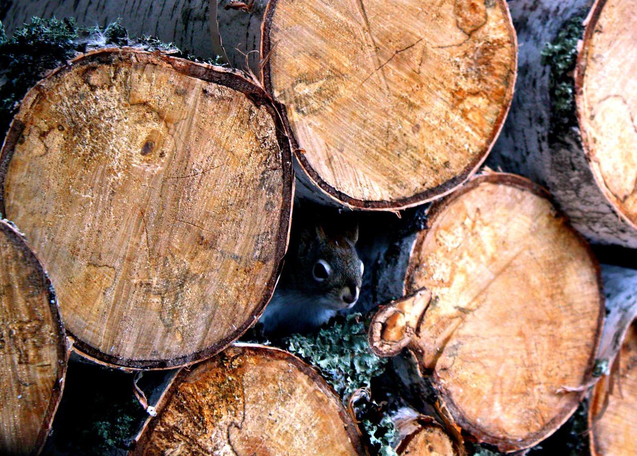 Original Log Cabin