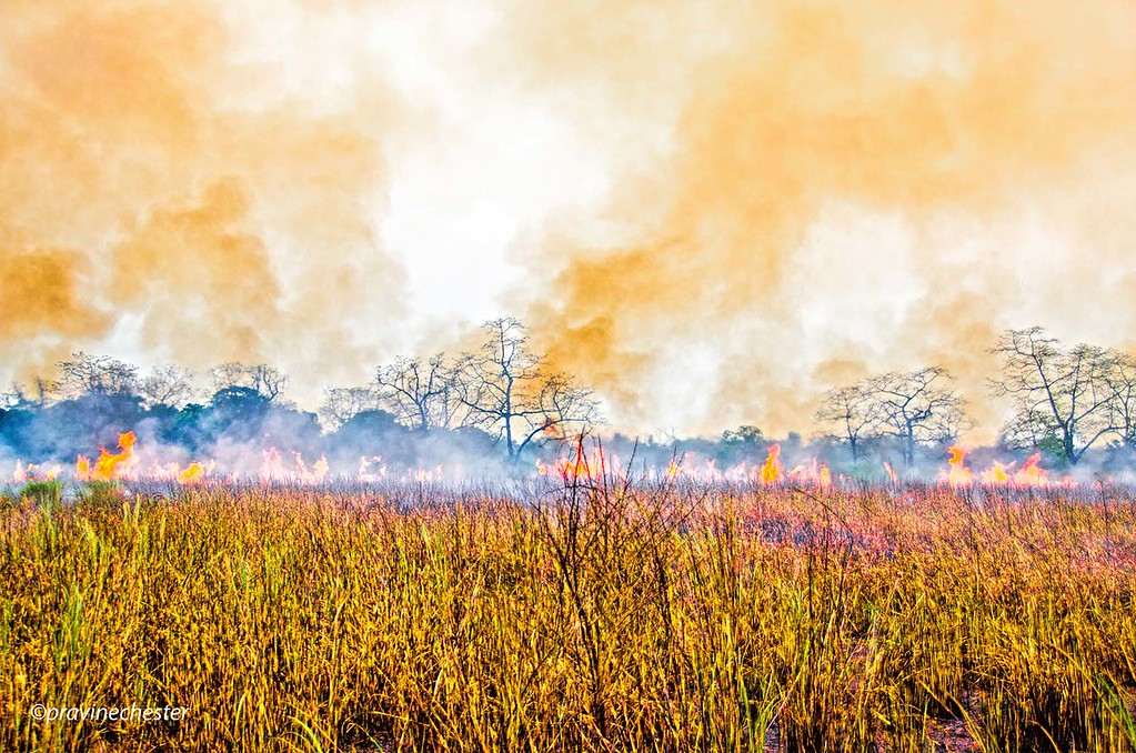 Grassland on fire