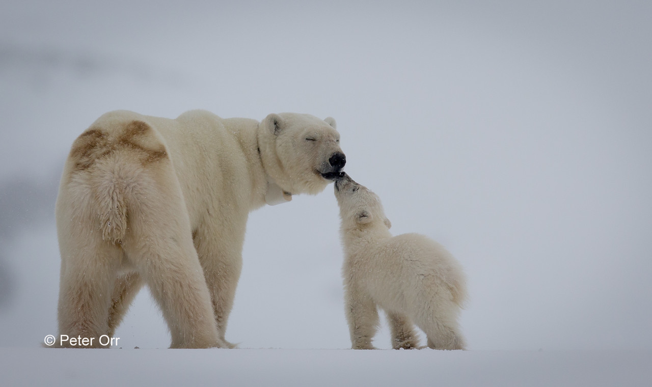 Mother and baby in Svalbard