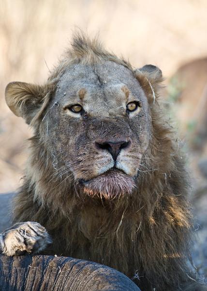 UCSF trip to Zambia, Botswana, Namibia, RSA
