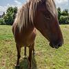 Wild Horse of Corolla 8/6/16
