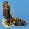 Spirit Eagle