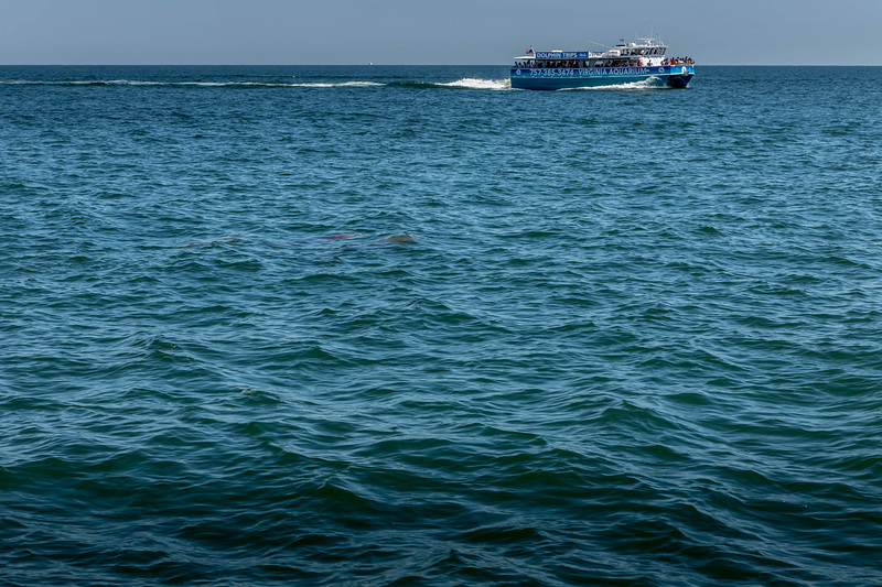 Dolphins-030