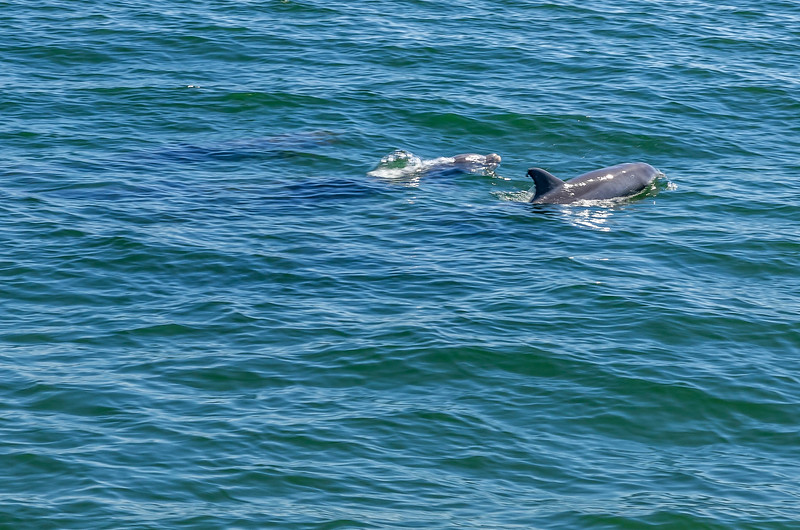 Dolphins-010