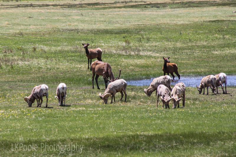 Sharing Sheep Lakes