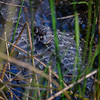 Baby alligator resting on its mother's back, Everglades National Park, Florida