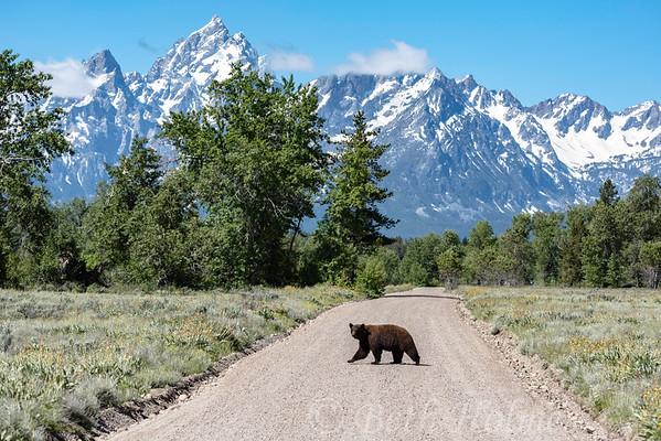 Backroad Black Bear