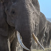 Closeup of elephant, Amboseli National Park, Kenya, East Africa