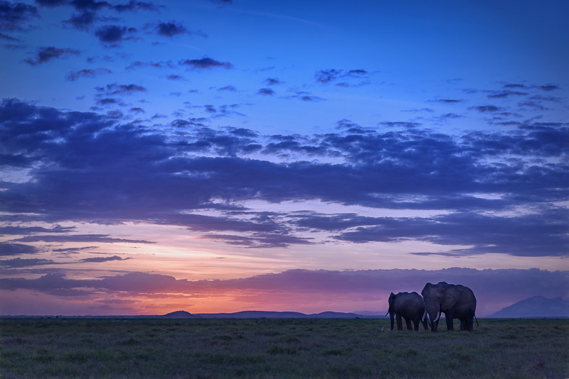 Elephants after sunset, Amboseli National Park, Kenya, East Africa