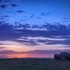 Elephants after sunset, Amboseli National Park, Kenya, East Africa