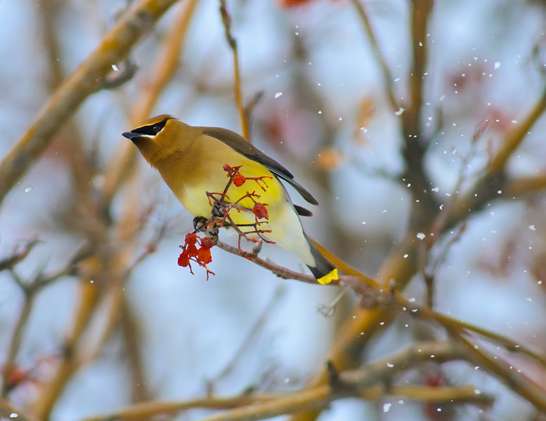 Waxwing Wind Tunnel Testing