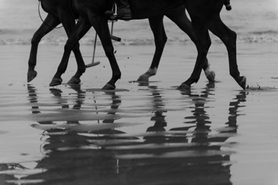 Horses on the beach at Morro Strand.