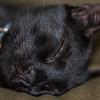 Sleeping Gutsy (RIP)
