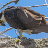 Osprey Self Inspection 4/20/16