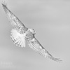 White Owl in Black and Whiet