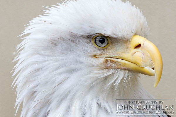 Eagle1d