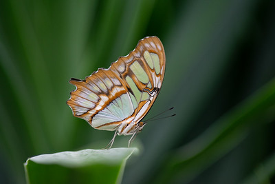 Tropical Butterfly_3