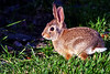 Aww Bunny!