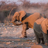 Elephants spray dust on themselves at Klein Namutoni waterhole in Etosha National Park, Namibia, Africa