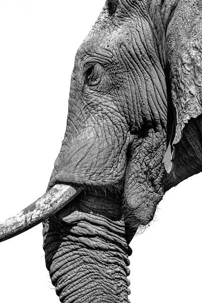 Botswana-09993-Edit-2-Edit.jpg