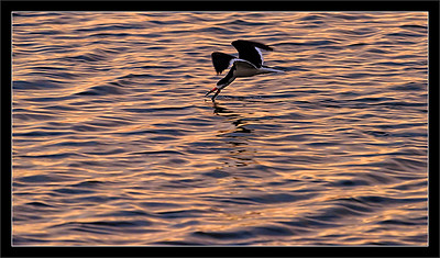 Skimming at Sunset