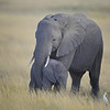 Mother and Baby Elephant, Amboseli National Park, Kenya, East Africa