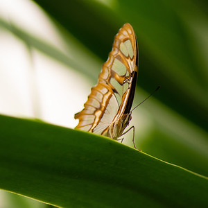Tropical Butterfly_1