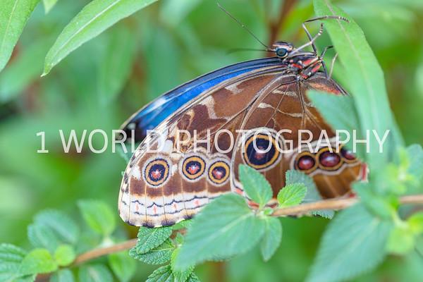 Butterflies, Birds, etc