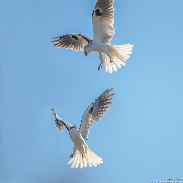 Kite Ballet