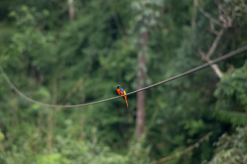 Zip Bird