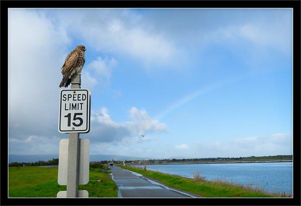 Hawk & Rainbow