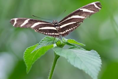 Tropical Butterfly_5