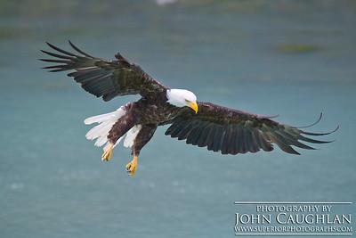 Eagle2b