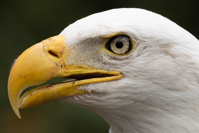 The Extreme Eagle Eye Closeup