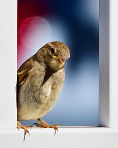 #2102 - unnamed bird