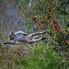 Tree Hopping Baboons