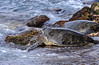 LaniakeaBeachHawaiianGreenSeaTurtle-020